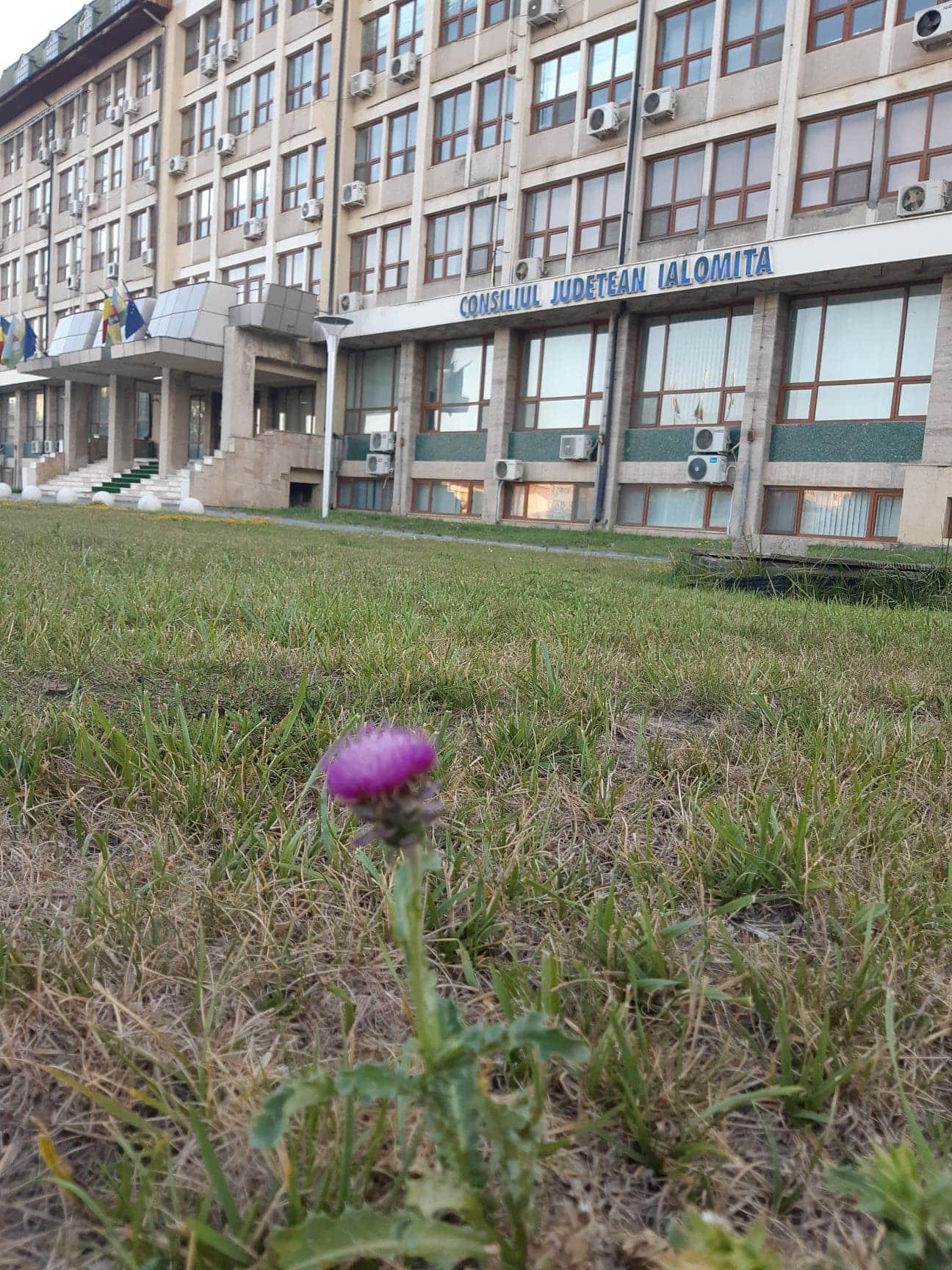 Cui anume şi pentru cât a concesionat Consiliul Judeţean cele 600 de hectare din zona Vlădeni